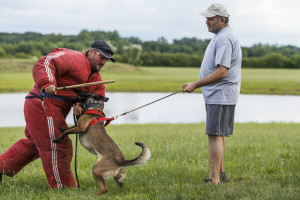 East Hartford, CT, 07/08/15; Hometown hero Bryan Colletti (right), President & Founder of K9CS, Inc in Newington CT with dog Pretty, works with fellow K9 trainer Paul Octaviani at a field near the Cabela's Retail Store Wednesday evening. Collettei trains dogs, usually Belgian Malinois and German Shepherds, to be a working police K-9. photo by David Butler II