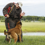 East Hartford, CT, 07/08/15; Hometown hero Bryan Colletti, President & Founder of K9CS, Inc in Newington CT trains with K9 Dolman, a Belgian Malinois, at a field near the Cabela's Retail Store Wednesday evening. Collettei trains dogs, usually Belgian Malinois and German Shepherds, to be a working police K-9. photo by David Butler II