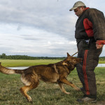 East Hartford, CT, 07/08/15; Hometown hero Bryan Colletti, President & Founder of K9CS, Inc in Newington CT trains with K9 Pi, a German Shepherd, at a field near the Cabela's Retail Store Wednesday evening. Collettei trains dogs, usually Belgian Malinois and German Shepherds, to be a working police K-9. photo by David Butler II