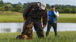 East Hartford, CT, 07/08/15; Hometown hero Bryan Colletti (left), President & Founder of K9CS, Inc in Newington CT trains with K9 Pi, a German Shepherd, and with fellow K9 trainer Paul Octaviani at a field near the Cabela's Retail Store Wednesday evening. Collettei trains dogs, usually Belgian Malinois and German Shepherds, to be a working police K-9. photo by David Butler II
